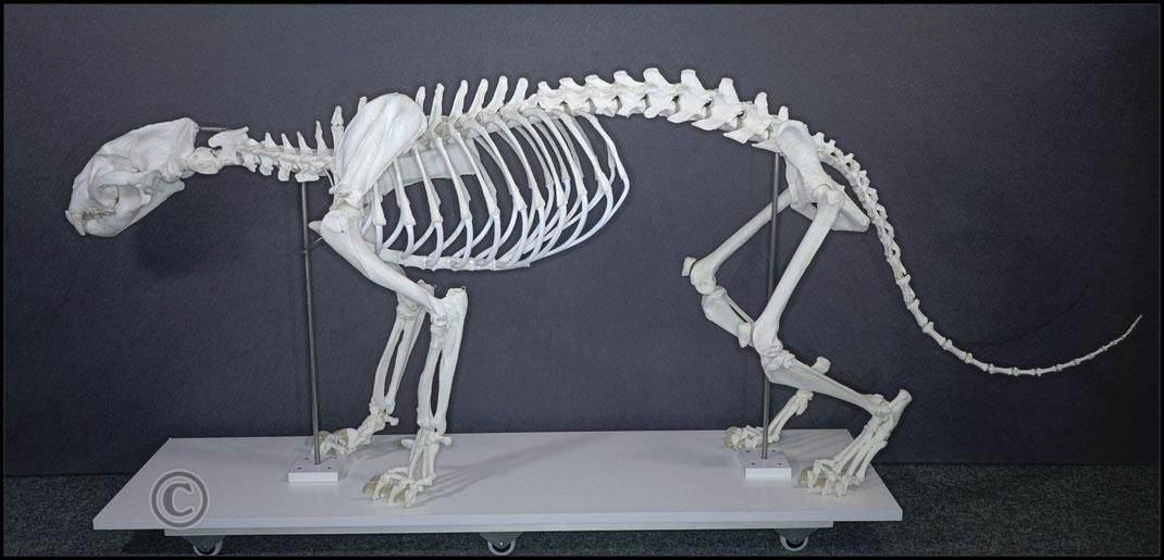 Rekonstruktion der Originalanatomie/forensisches Modell