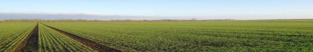 Investieren in Landwirtschaft