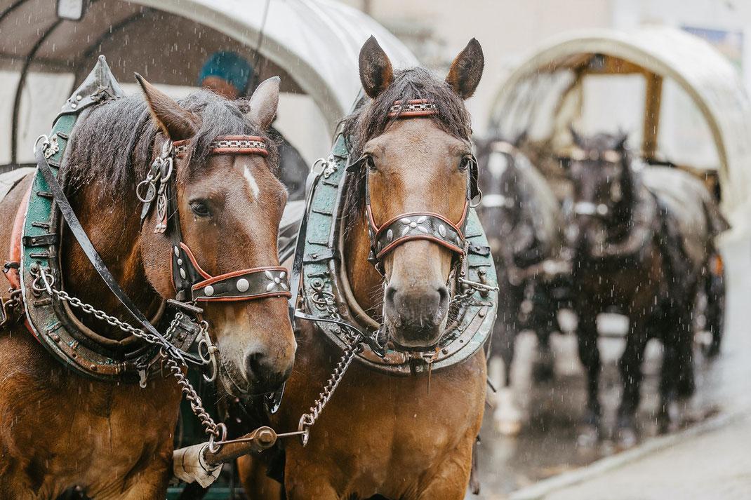 Pferdekutsche Oberwiesenthal