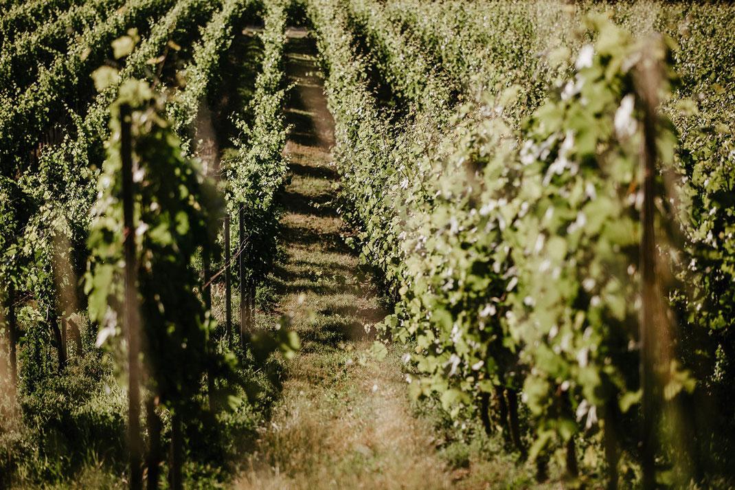 wein naumburg saale, Weinanbaugebiet Saale-Unstrut