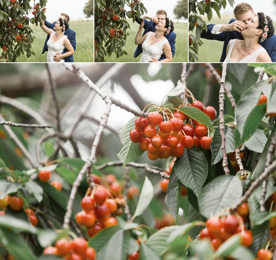 lustige Hochzeitsfotos, Brautpaar, Hochzeitsfotos, Hochzeitsfotograf, Hochzeit im freien, Kirschen, kirschbaum, Kirschen essen, heiraten