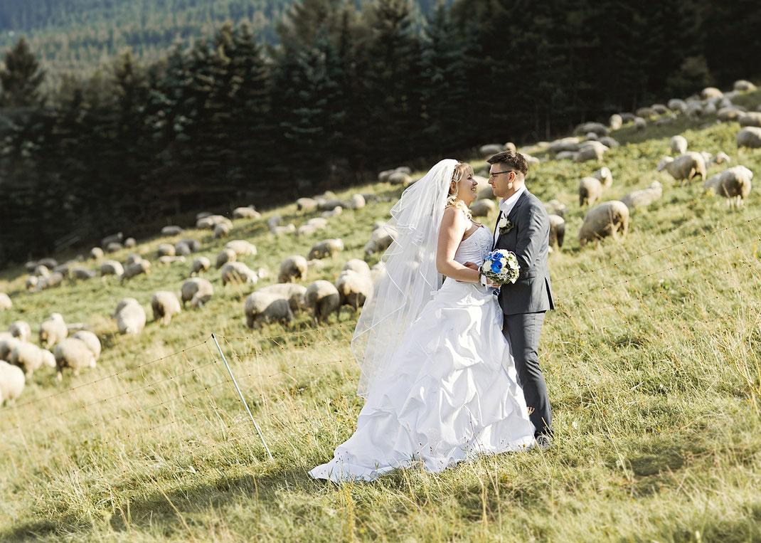 Brautpaar auf weide mit Schafen in oberwiesentahl, als Hochzeitsfotograf in Deutschlands höchstgelegene Stadt oberwiesenthal im Erzgebirge