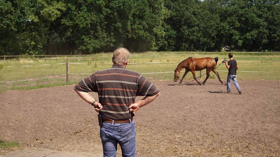 Pferde begutachten Tierarzt Pferdephysiotherapeut DIPO Ostertherapeut Osteotherapie TOS Dr. Grommes