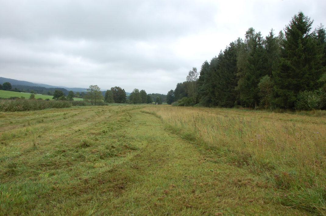 Bei den Nasswiesen im Zellertal wird bei der Mahd ein jährlich wechselnder Altgrasstreifen stehen gelassen