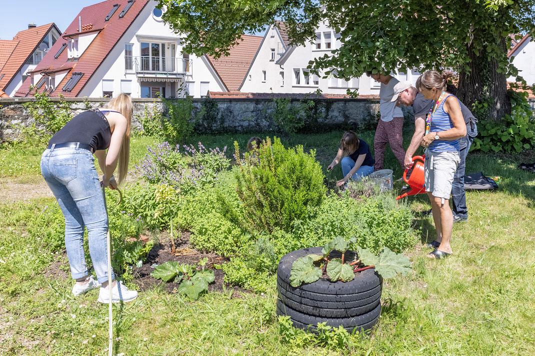 Bildung für nachhaltige Entwicklung - Unser Kräutergarten
