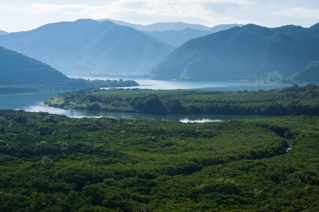 奄美大島のマングローブ林