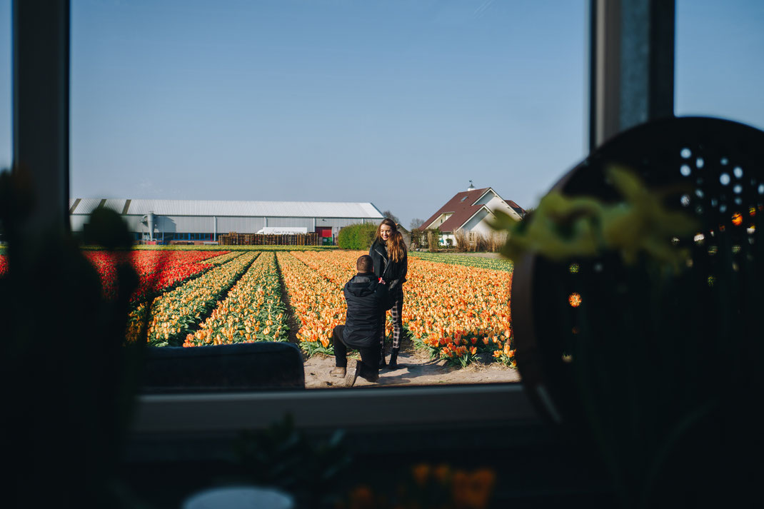 Surprise proposal tulip fields