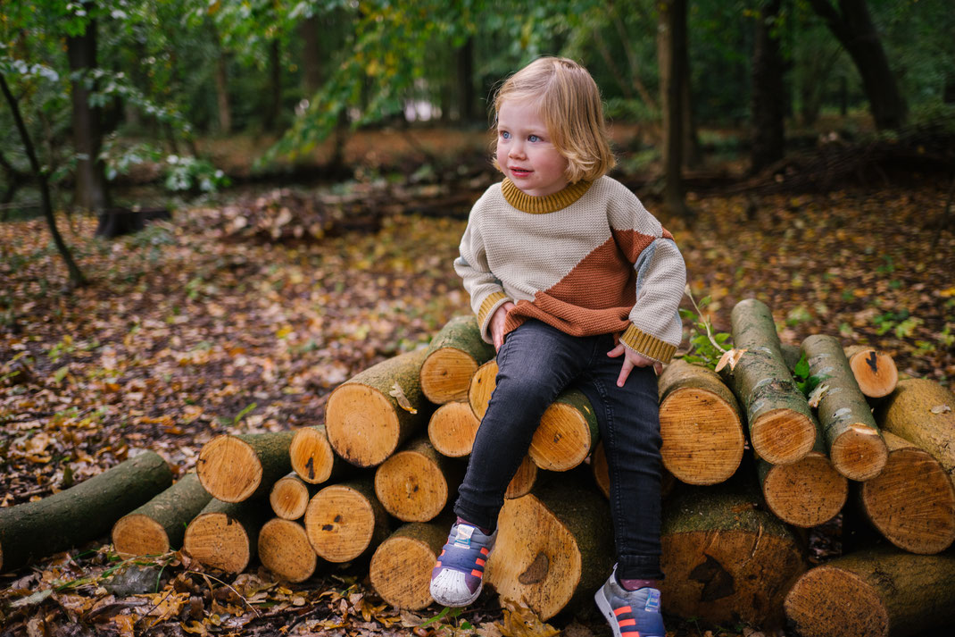 tree logs Leiden