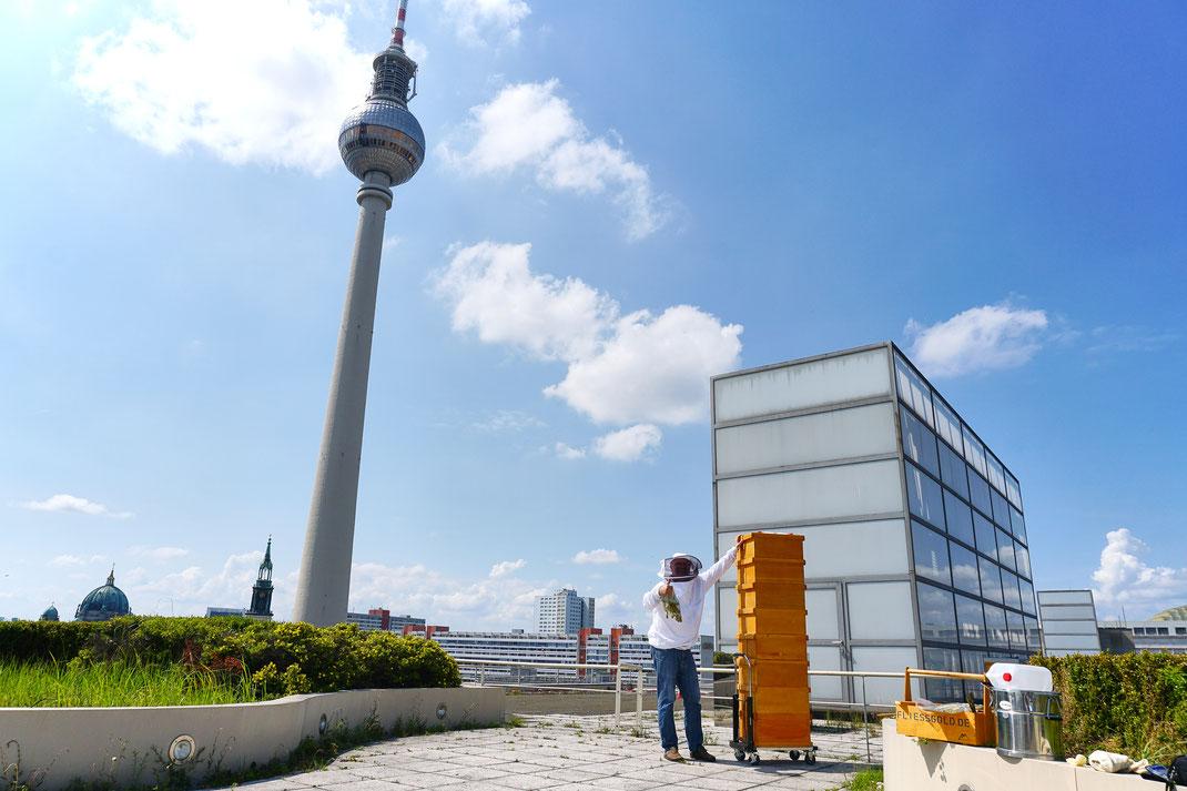 Große Honigernte auf dem Dach der Berliner Sparkasse im Herzen Berlins.