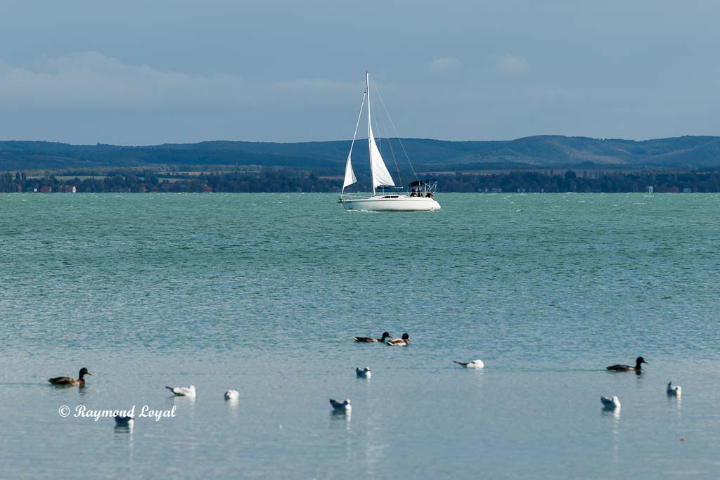 Balaton photography