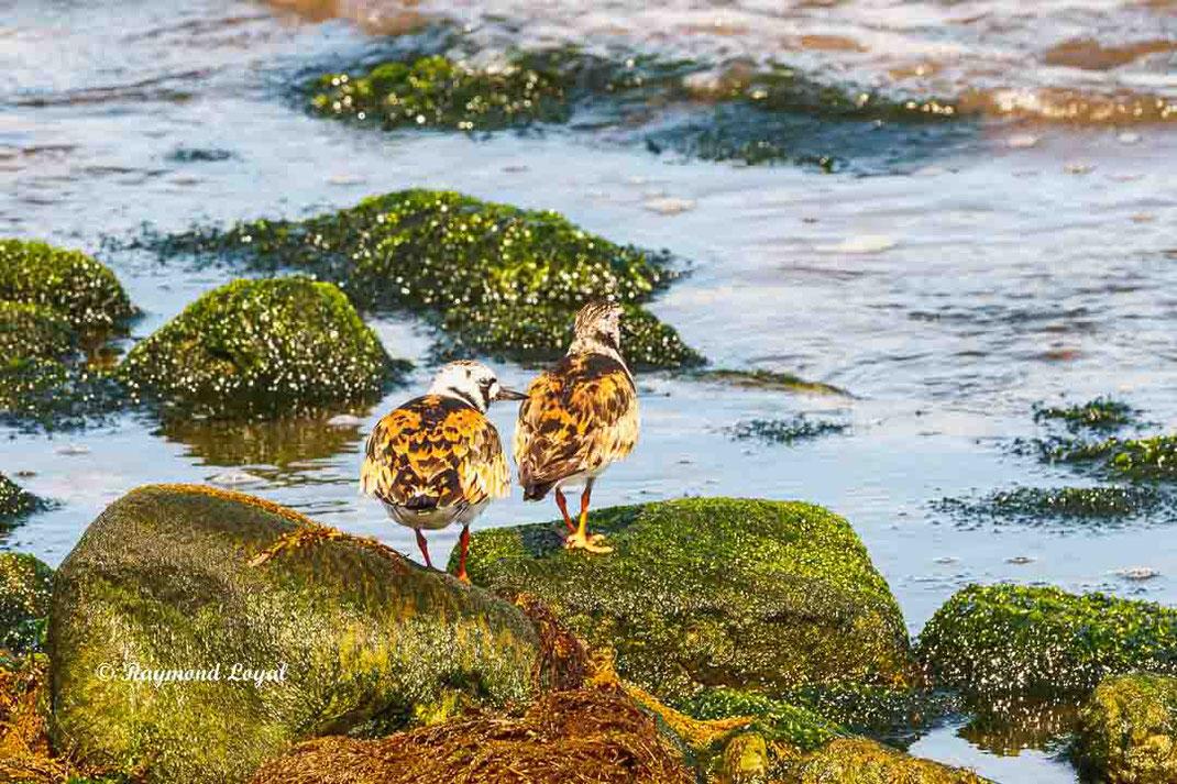 steinwaelzer felsen strand wasser