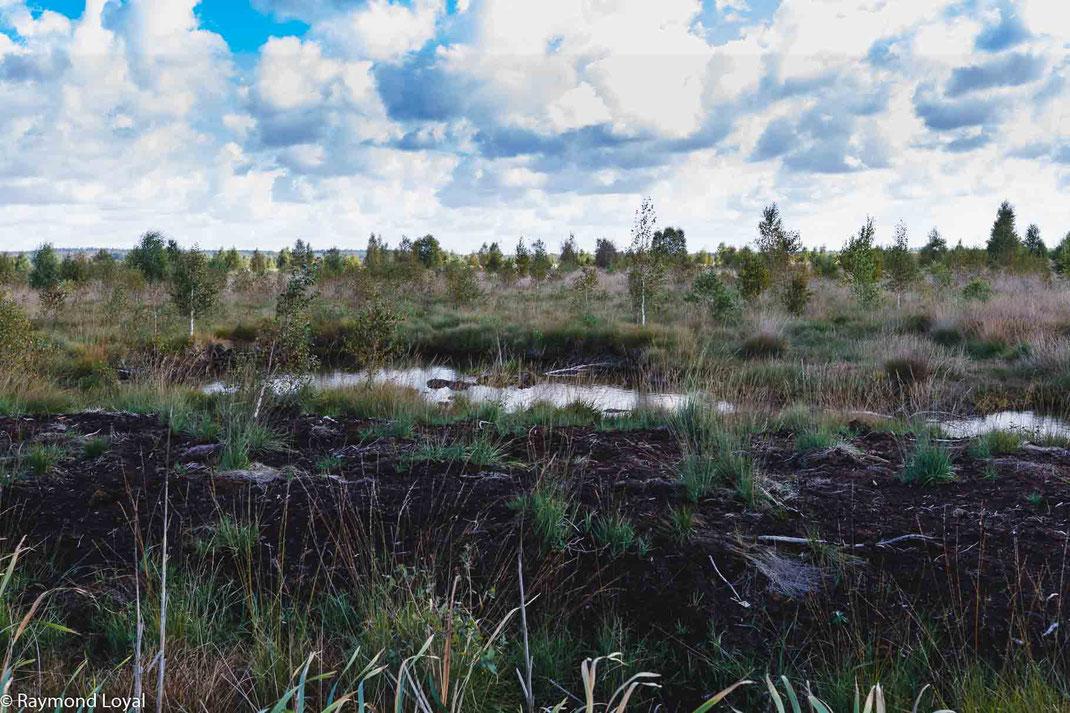 Rehdener Geestmoor Diepholzer Moorniederung