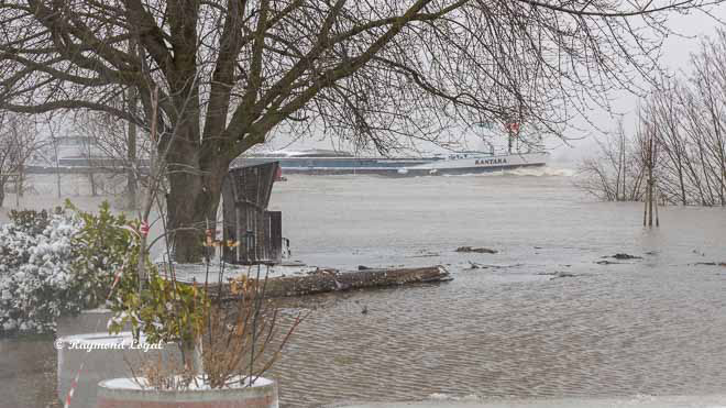high water on the rhine