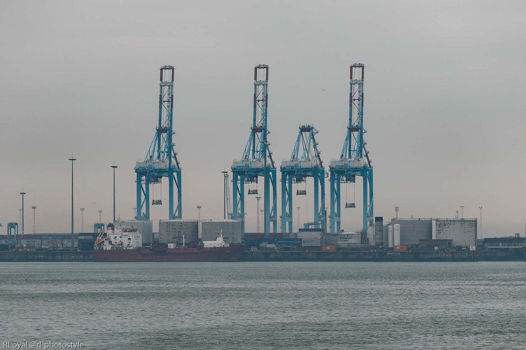 container terminal port of zeebrugge