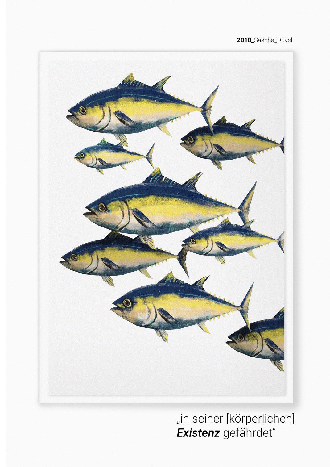 southern bluefin tuna - Thunnus maccoyii