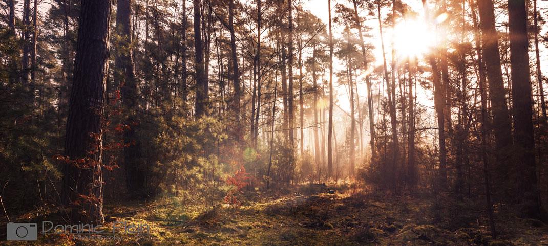 Dudenhofener Wald - Sonnenaufgang