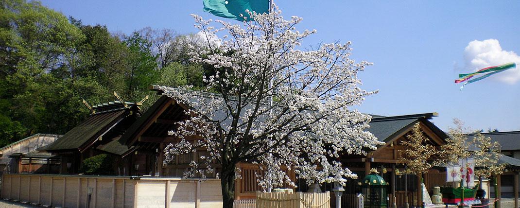 拝殿前桜木 御神示・御祈祷受付