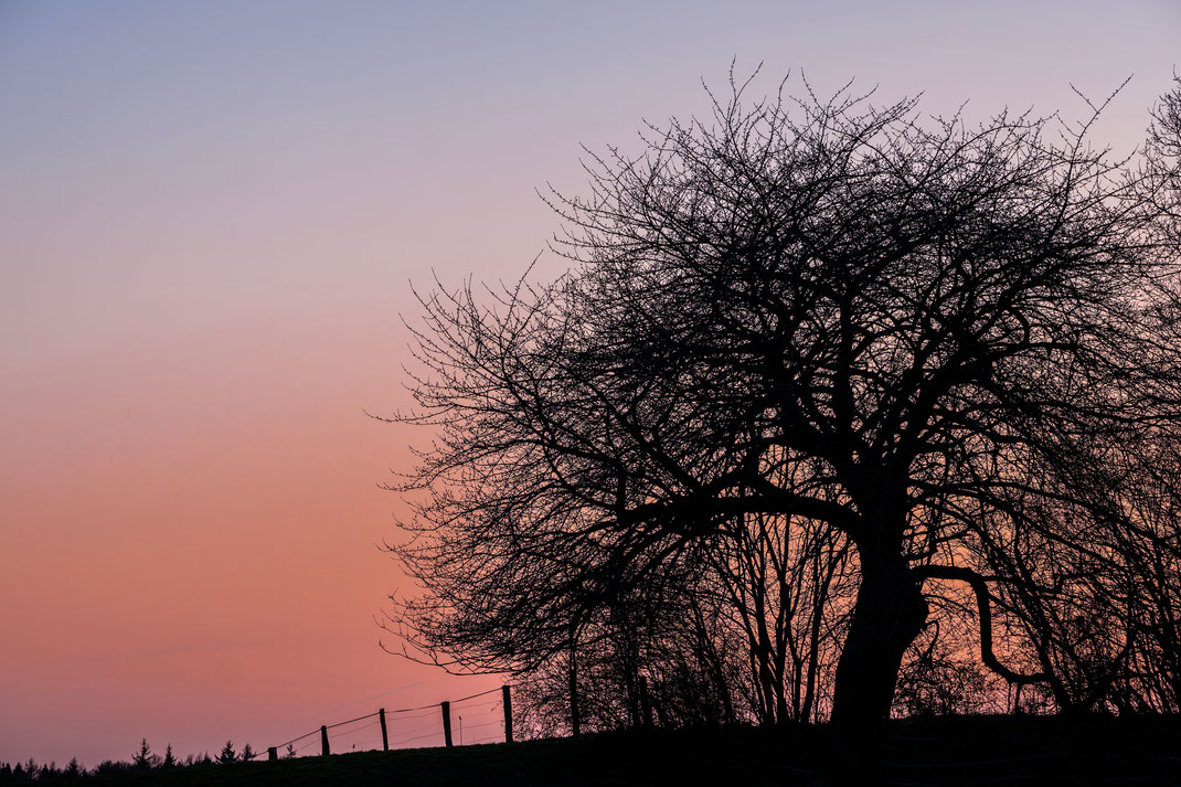 Baum knorrig Sonnenuntergang Feld und Flur