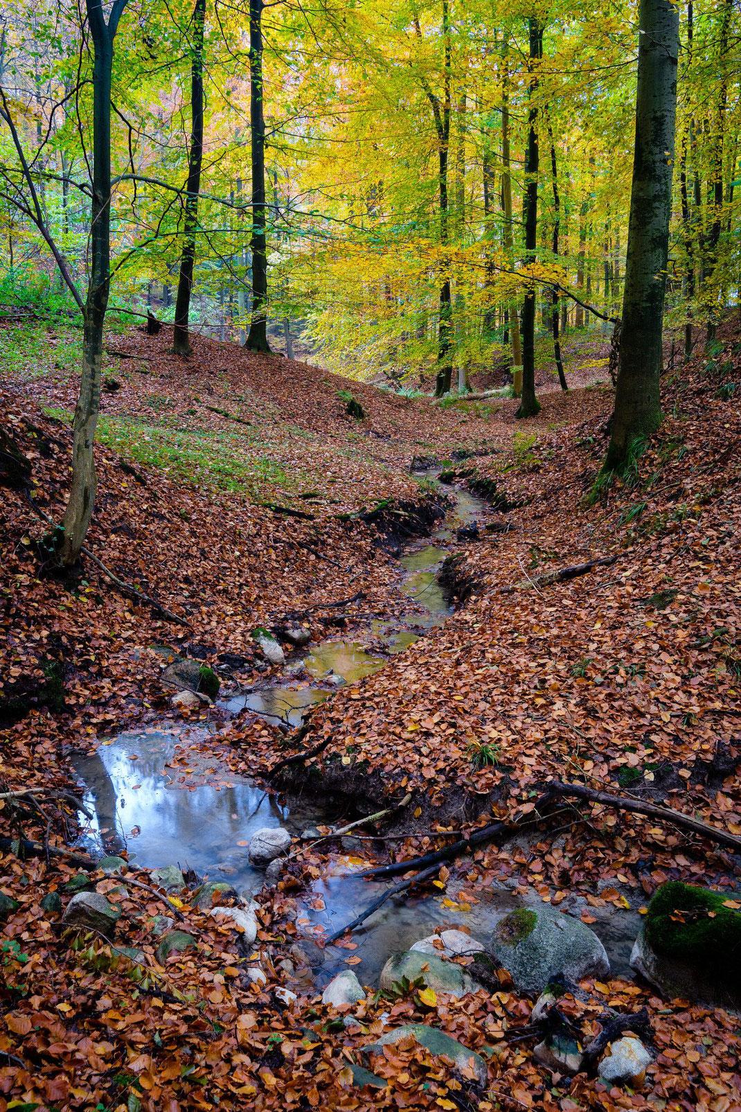 Kossautal hinter Dannau Herbst Laub Laubfärbung Ostholstein