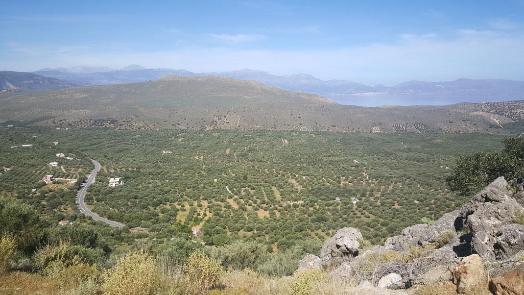 Kreta Olivenöl
