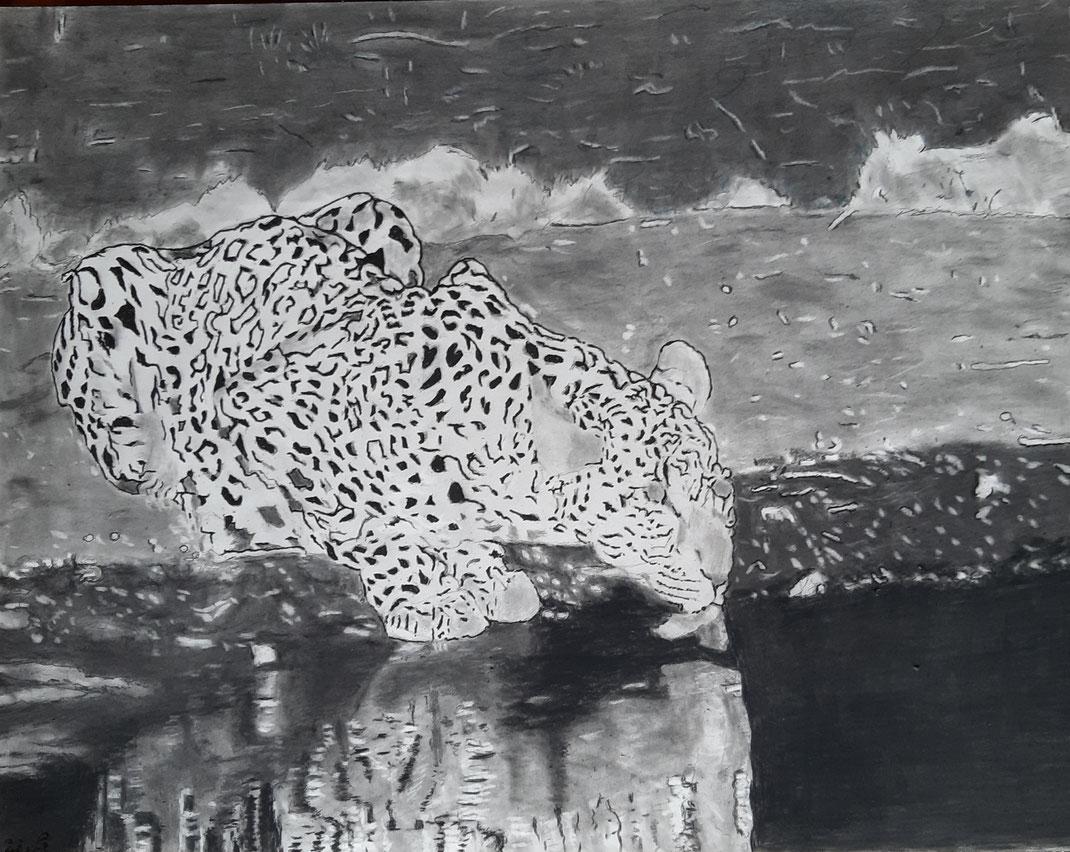 Un léopard, tard, le soir, au bord de la mare