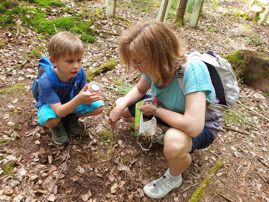 Im Wald gab es einiges zu entdecken (Foto: Olivia Dieser)