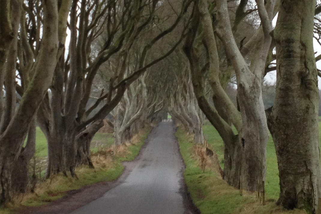 Irland, Nordirland, Games of Thrones, Dark Hedges