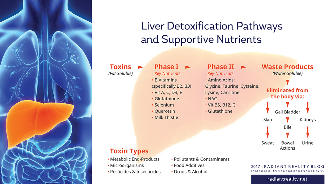 Radiant Reality Blog | Healthy Hormones | Liver Detox Pathways