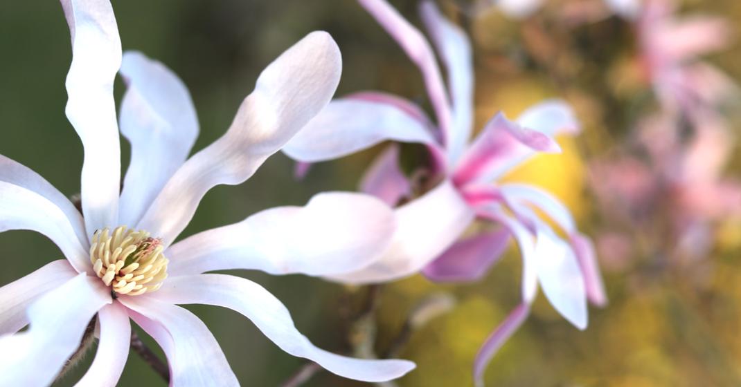 Visite Jardin Botanique de Tours (37) Serres