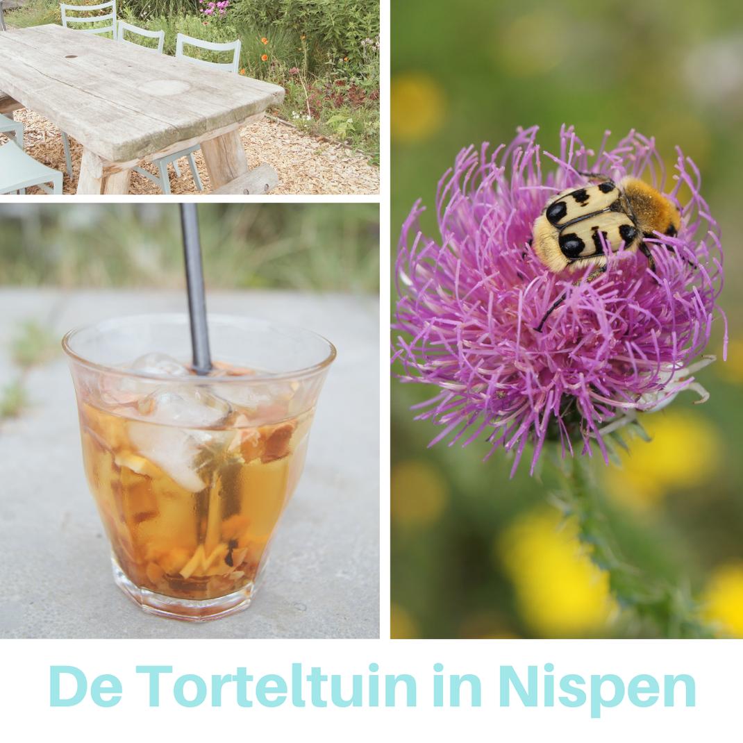 Theetuin: de Torteltuin in Nispen. Een plekje in het groen om even bij te komen. By Thee is Hip!