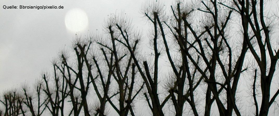 Kahle Bäume als Symbolbild für den Volkstrauertag. Quelle: Bbroianigo/pixelio.de