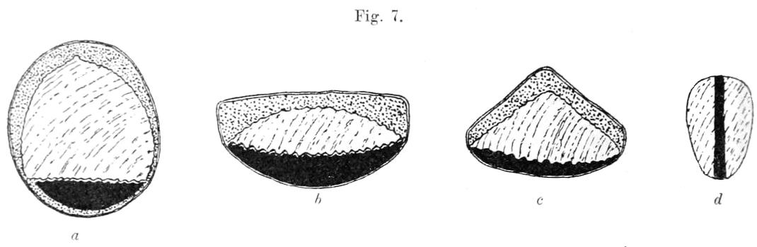 Querschnitte durch einen Turkistan-Bogen: a durch die Mitte des Griffes, b durch die Mitte eines der Arme, c durch einen Grat, d durch ein Ohr.