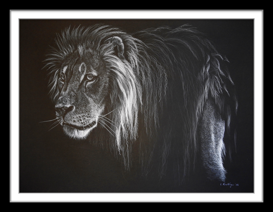 lion Löwe drawing Zeichnung schwarz weiss black white Farbstift coloured colored pencils pencil