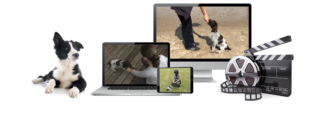 online Hundetraining, toll, Videos, gute Bindung, einfach, Hundeerziehung, optimaler Begleiter, Welpen, Kurs, Hundeschule, Welpenschule