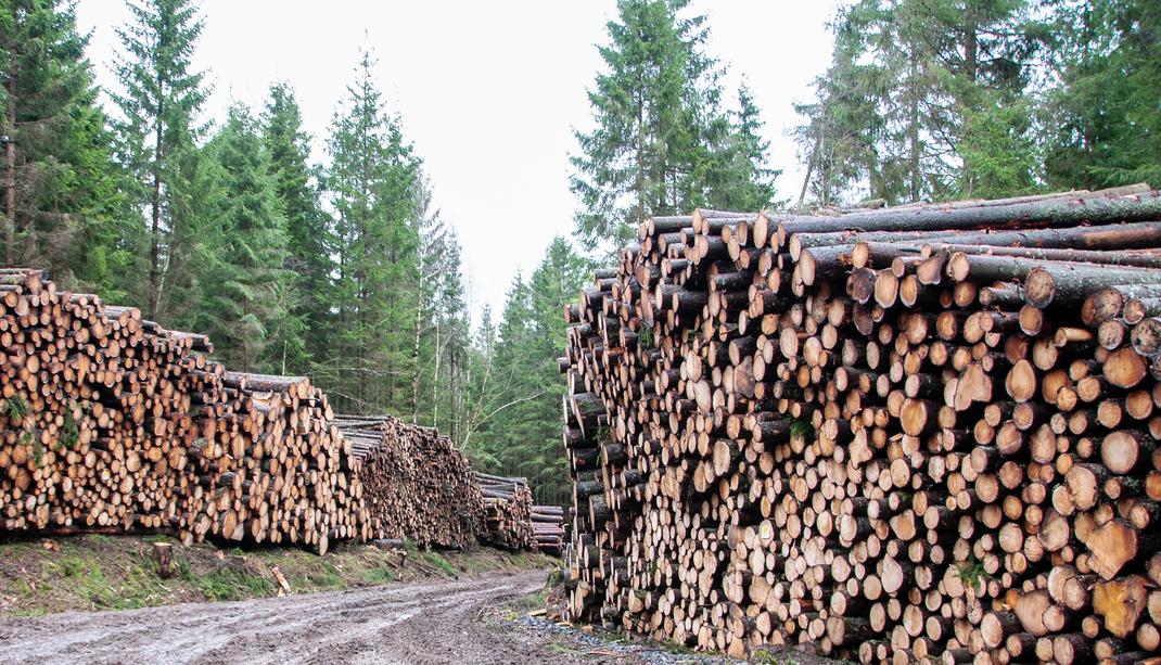 Rohstoff Holz für unsere Schwedenhaeuser Ferienhaus von idealhus