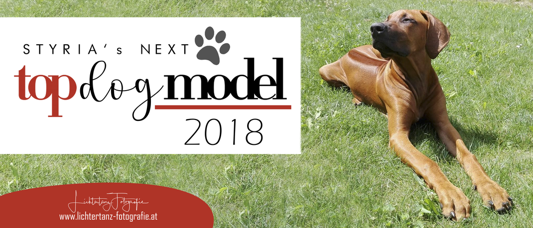 Styria's Next Top Dog Model 2018 Maya Rhodesian Ridgeback by Lichtertanz Fotografie