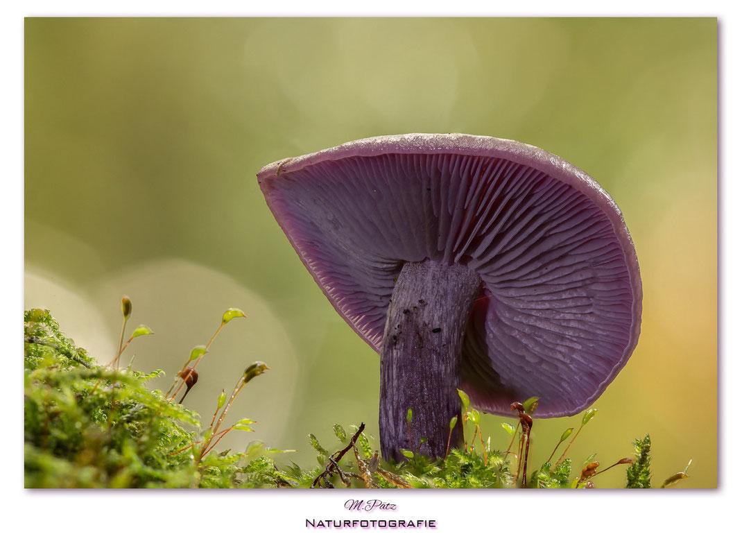 Die Herbstzeit Ist Die Zeit Der Pilze Michael Patz Naturfotografie