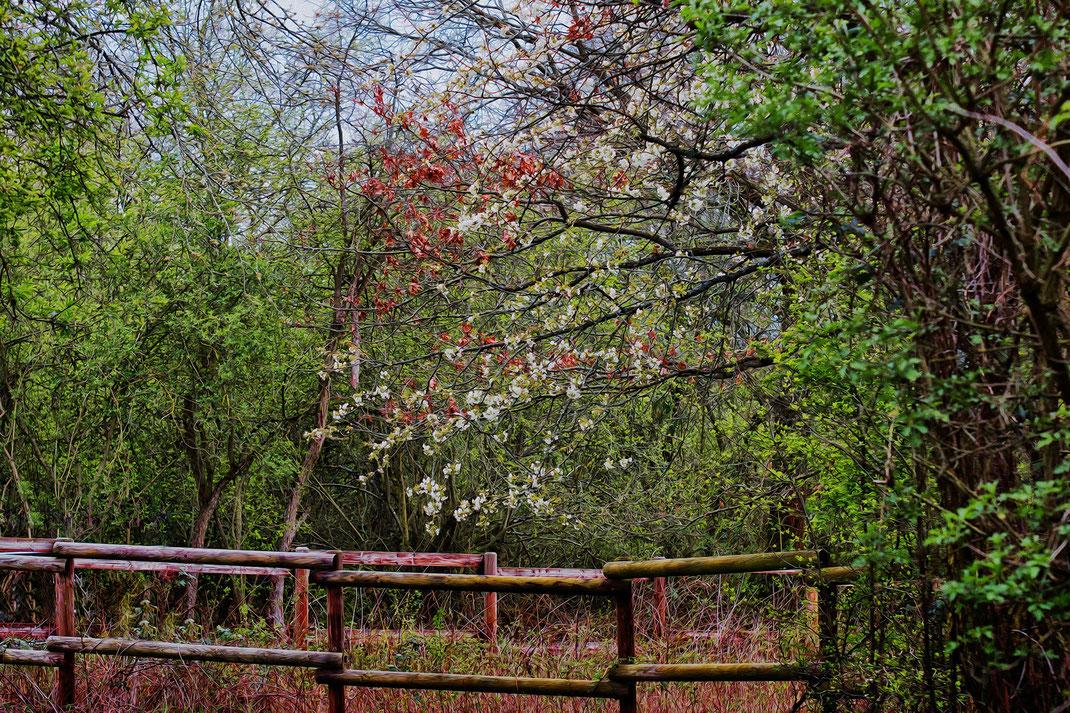 Baeume und Straeucher im Fruehling © Jutta M. Jenning