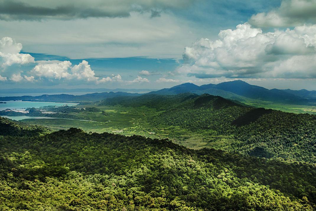 dschungel-regenwald-langkawi-malaysia