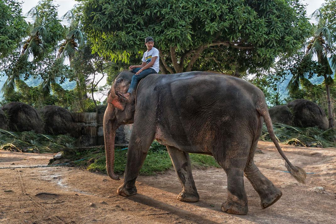Der Mahout sitzt auf seinem Elefant im Elefantencamp in Naan Thapong auf Koh Phanghan