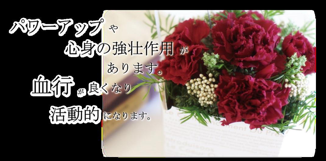 赤の花は、パワーアップや心身の強壮作用があります。血行が良くなり活動的になります。ワンランク上のプレゼントにフラワーセラピーを