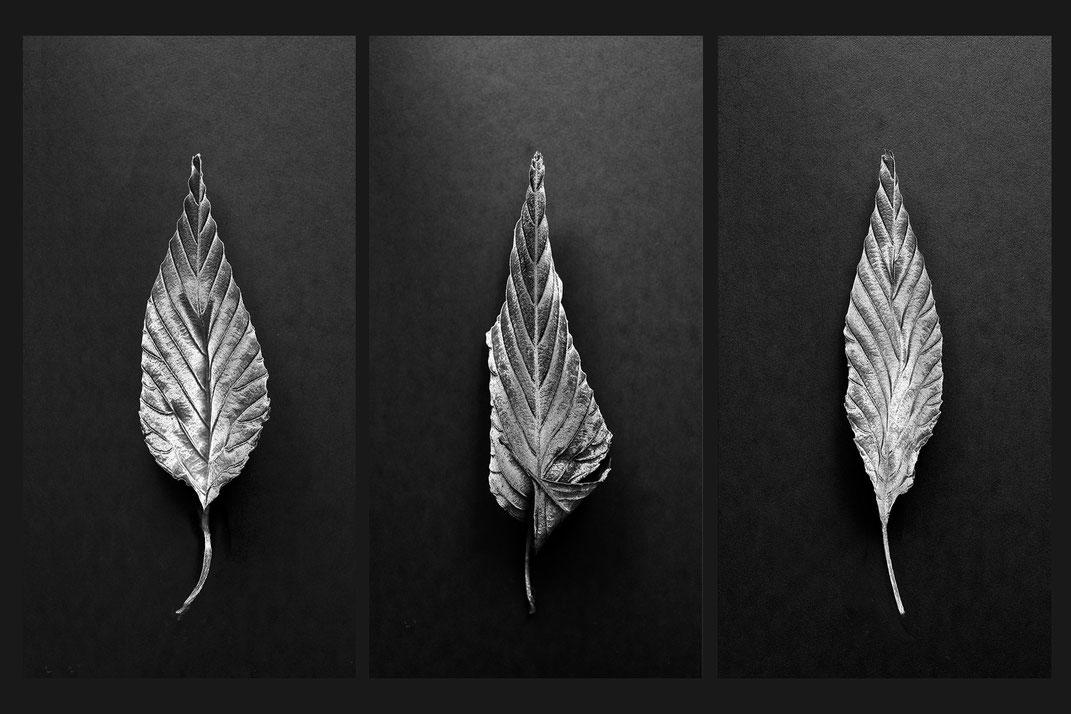 Trilogie, Fotografie von silbernen Blättern, Digitalfoto 2021