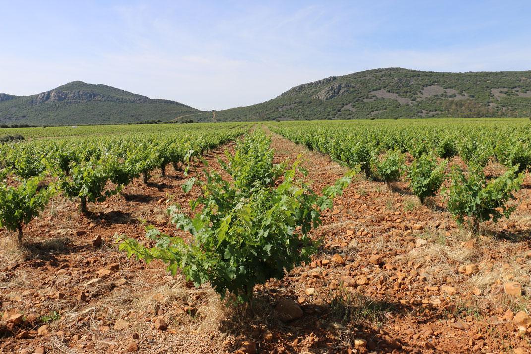 Pago los Balancines Ribera del Guadiana Tinta Roriz vinwin.de en vaso Reben