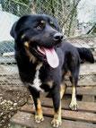 Berta heißt nun Bela und lebt mit ihrer Familie bei Esche... :-)