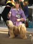 Am-ne-garpa Baghira Tibet Terrier Hündin