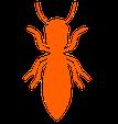 eliminación de carcoma y termitas