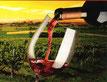 Weinglas Rotwein Sonnenschein Hintergrund grüner Weinstock