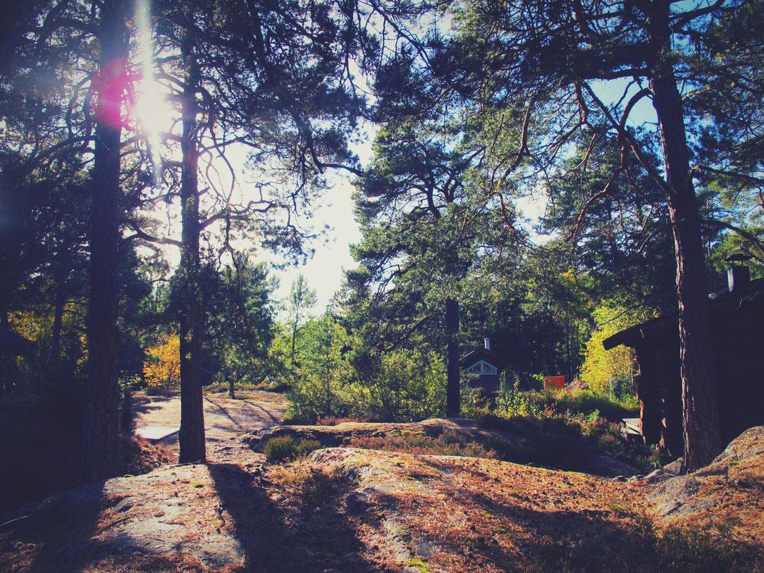 bigousteppes suède cabane bois forêt