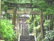 惣河内神社   山紫陽花6月中旬