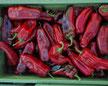 Paprika Corno rosso Bild Reinsaat